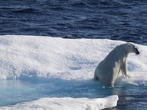 خرس قطبی نوناووت